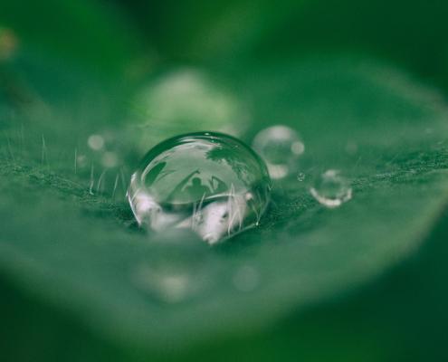 Nachhaltigkeit mit Kodak Alaris